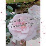 Reze conosco o 2° dia do tríduo a Maria Madalena Frescobaldi